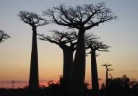END『マダガスカルの大自然とサザンクロス街道・イサロ国立公園の旅』
