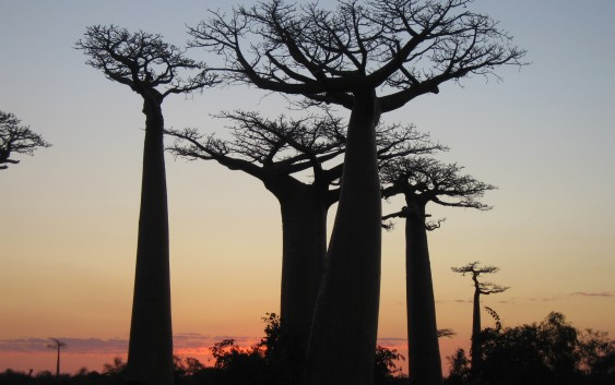 Fin.マダガスカルの大自然とサザンクロス街道・イサロ国立公園の旅