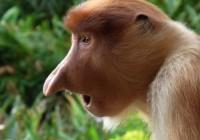Fin.【オランウータンとテングザルの東マレーシア】ボルネオ島の野生動物保護区群・       キナバル山国立公園とブルネイ王国の旅 10日間