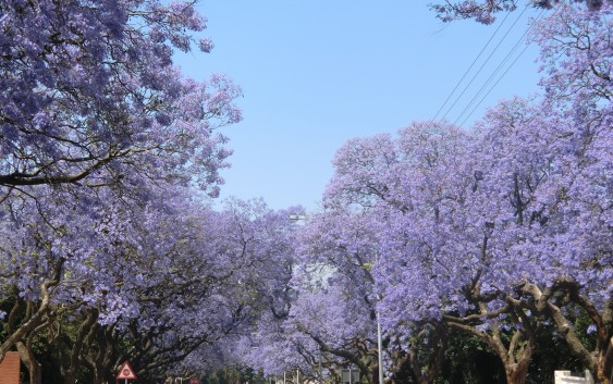 END『ジャカランダの季節の南アフリカ~ビクトリア大瀑布と喜望峰の旅』