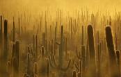 2017/05/16発『世界最大のサワロサボテンとカールスバッド 知られざるアメリカ西南部国立公園群』 NEW!