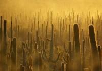 Fin.世界最大のサワロサボテンとカールスバッド~知られざるアメリカ西南部国立公園群
