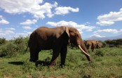 END『動物天国マサイマラ国立保護区滞在とヌーの大移動の旅』