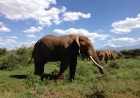 Fin.動物天国マサイマラ国立保護区滞在とヌーの大移動の旅