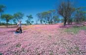 END『西オーストラリア・ワイルドフラワー鑑賞の旅』