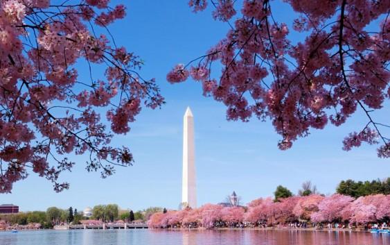 2019/03/26発.ボストン・ニューヨーク・フィラデルフィア・ワシントンDC アメリカ東部縦断~美術館巡りと全米桜祭りの旅 11日間