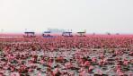 2017/01/11発『タイ「紅い蓮の海」と「メコン川の不思議な穴」の旅』キャンセル待ち