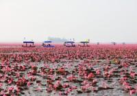 Fin.タイ~紅い睡蓮の海とメコン川の不思議な穴の旅