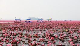 2018/01/11発『タイ「紅い睡蓮の海」と「メコン川の不思議な穴」の旅』 催行決定!