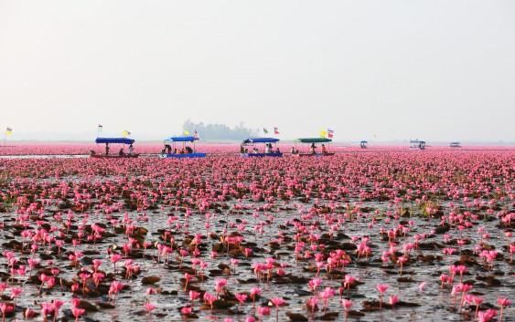END『タイ「紅い睡蓮の海」と「メコン川の不思議な穴」の旅』