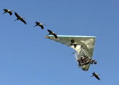 2017/06/05発『鳥たちと大空を飛ぶ感動の遊覧体験とフランス中央高地の旅』催行決定/キャンセル待ち