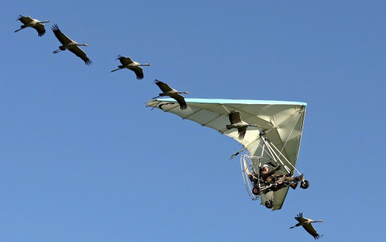 Fin.鳥たちと大空を飛ぶ感動の遊覧体験とフランス中央高地の旅