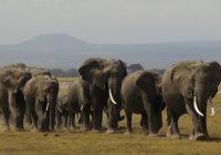2017/11/14発『野生の王国・タンザニア大自然サファリの旅』 NEW!