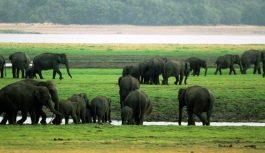 2019/09/02発緑の島スリランカ周遊とセイロン象の大集結 10日間