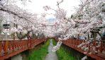 2018/04/05発『百済・新羅紀行~韓国古都逍遥と桜の鎮海』 NEW!