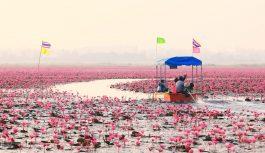 2019/01/15発紅い睡蓮の海とタイの癒しの町チェンカーンの旅 8日間 【催行決定】