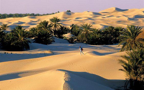 2019/11/07発色彩の国チュニジア周遊とボン岬半島の旅 14日間