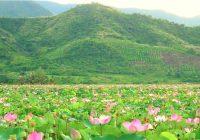Fin.タップムオイ「蓮の花」水郷地帯とベトナム最南端への旅 7日間