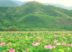 2020/10/22発タップムオイ「蓮の花」水郷地帯とベトナム最南端への旅 7日間