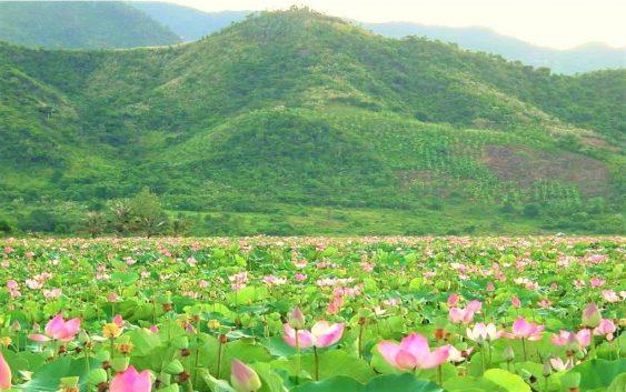 2020/08/20発タップムオイ「蓮の花」水郷地帯とベトナム最南端への旅 7日間