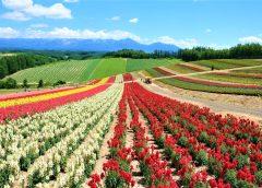 2021/08/23発北海道の旅行会社が創る『北海道・夏の旅』7日間【決定間近】