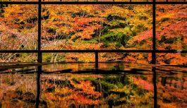 2020/11/25発錦秋の京都逍遥 5日間