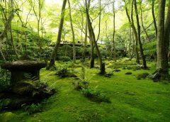 2021/06/06発初夏の風物詩・京都の青もみじと苔を愛でる彩り探訪の旅 5日間