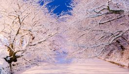 Fin.「なまはげ柴灯まつり」と「冬に咲くさくら」と「不老ふ死温泉」の旅 5日間