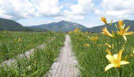 2021/07/26発 ニッコウキスゲの大群生~花の尾瀬ハイキングの旅 5日間